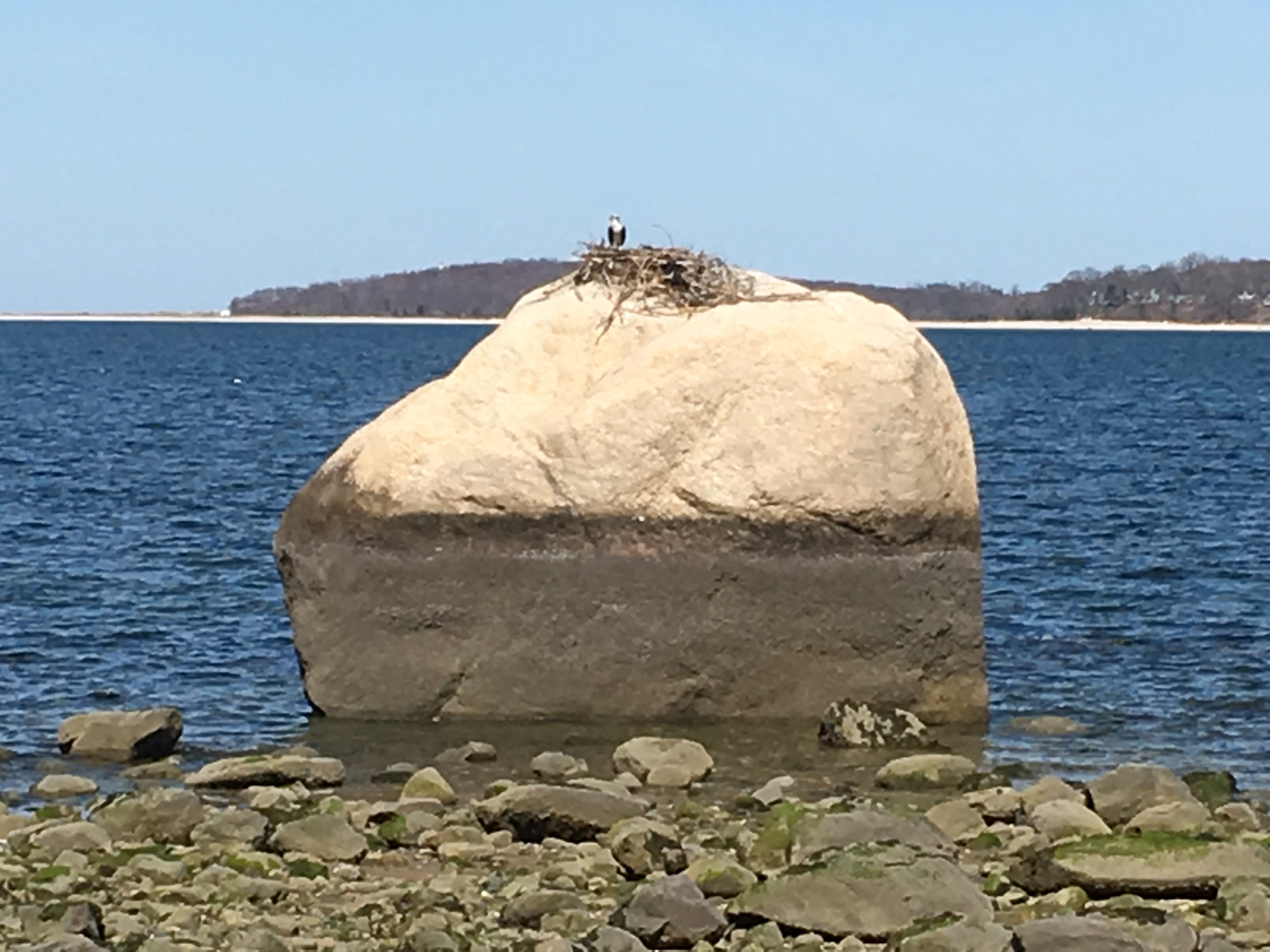 The only famous Huntington boulder not moved by artificial means. Target Rock still sits where the glacier left it off the east side of Lloyd's Neck. (Although technically in Oyster Bay, we can claim it as Huntington's)